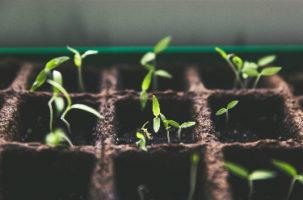 Bonos de impacto social: financiando el éxito